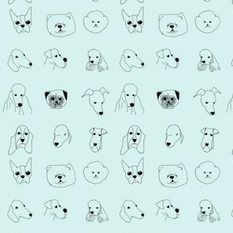 Dogwallpapercloseupblue