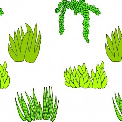 Succulent Master1