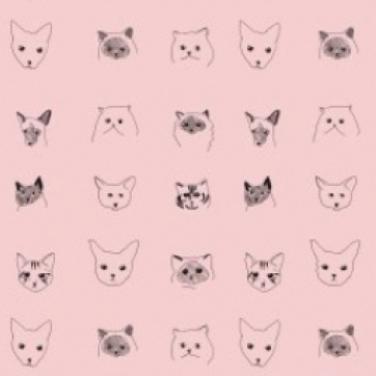 cat situ paper pink copy